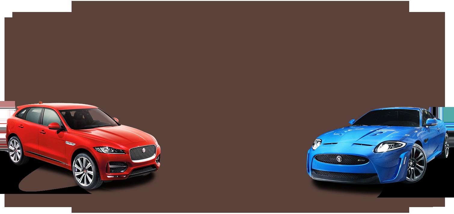 jaguar-selection